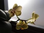 Lill hoopis teises ruumis :)